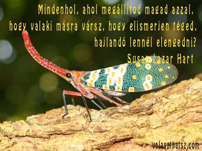 A lantern bug (Pyrops candelaria) on a tree branch. Huay Xai, Bokeo, Laos