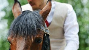 Hogyan beszéljünk a lovakkal? – Hogyan beszéljünk a lovakkal? – Connor Hill