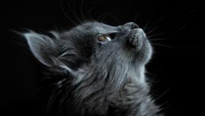 Mi minden lehetséges mikor a macskád leélte 9 életét? – Gary Douglas
