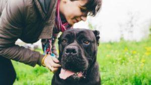 Mire tud tanítani egy kutya a nagyszerű kapcsolatok kialakításáról – Stephanie Richardson