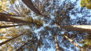 Légy egy új jövendő Föld teremtője – Dr. Dain Heer
